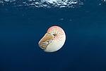Nautilus Research