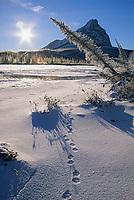 Lynx tracks in the snow along the open edge of the Koyukuk river, Mount Sukakpak, Brooks Range, Arctic Alaska.