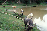 Farmers work with a water buffalo by a river in Yunnan, China.