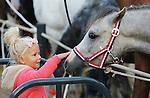 Foto: VidiPhoto<br /> <br /> ELST - De drie grote Nederlandse paardenmarkten Elst (Gld), Hedel en Zuid-Laren verkeren in grote problemen. Lage handelsprijzen, afnemende aanvoer van paarden, strengere Europese regelgeving en acties van de Dierenbescherming zorgen voor donkere wolken boven de eeuwenoude traditie van de najaarspaardenmarkt. Desondanks trekt de oudste paardenmarkt van ons land in Elst, ieder jaar zo'n 40.000 bezoekers. Naar Zuid-Laren komen zelfs 140.000 belangstellenden. Elst opende maandag het paardenmarktseizoen. Ditmaal met opnieuw fors minder aanvoer van dieren: 885 paarden en pony's ten opzichte van ruim 1200 vorig jaar. Door het plaatsen van barriers en het verspreiden van stro en hooi, is de markt in Elst opnieuw mens- en diervriendelijker. Water en voer is ruim voorhanden en dierenartsen controleren de paarden en pony's bij zowel aan- als afvoer. Vanaf volgend jaar mogen paarden niet meer direct geladen worden voor export naar het buitenland, maar moeten ze na verkoop eerst 48 uur in een overdekt verzamelcentrum verblijven. De markt overdekken is volgens marktmeester Frits Hoogveld financieel niet haalbaar. Volgens jaar moeten ook chip en paardenpaspoort dezelfde informatie bevatten. Anders mogen de dieren niet verkocht worden. De marktorganisatie is daarvoor verantwoordelijk. Paardenmarkten komen alleen in Nederland voor.