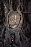 The head of a Buddha statue nestled in the roots of a tree in the grounds of an Ayutthaya temple.