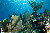 Coral Reef Scenic<br /> Mayreau Channel Garden.<br /> Grenadines
