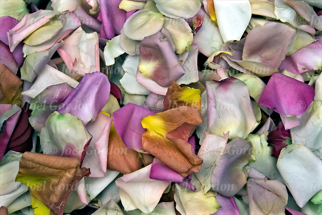 Buddhist flower petals ceremony joel gordon photography for Flowers union square nyc