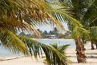 Belize, Central America - View through palm trees of the Tradewinds cottages on the end of the Placencia spit