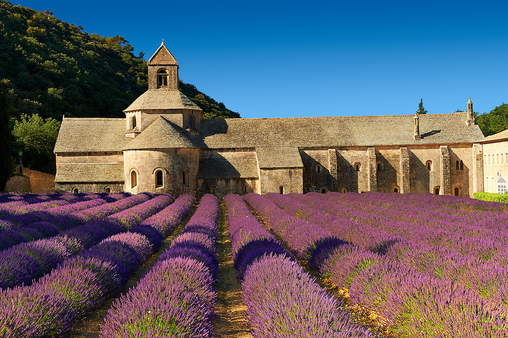 Senanque Abbey France Pictures, Photos and Images - Images ...