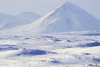 Flock of Willow Ptarmigan gather on the snow covered tundra of Alaska's Arctic Brooks mountains.
