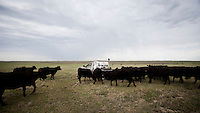 Kevin Larrabee feeds his cattle on his ranch in Mead, Kansas that has belonged to his family for over a hundred years. Kevin breeds and raises cattle here in sustainable manner that allows animals to roam freely on the pasture and feed on the grass. ..