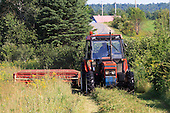Farm tractor mowing long ripe hay in field, there are lots of weeds in this hay field, summer crop