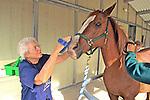 Ione Rice Brushing Horse