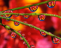 Mixture of flowers reflecting in dew drops on blades of grass