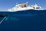 Split level of dwarf minke whale and Undersea Explorer.Balaenoptera acutorostrata