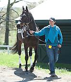 Middleburg Spring Races - 04/20/2013