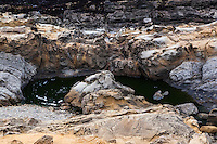 A pool carved out of the tafoni riddled sandstone at Bean Hollow State Beach.