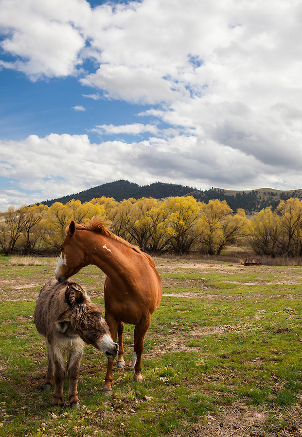 A brown horse nuzzles a smaller donkey while standing in a grassy pasture with blue sky and clouds overhead.