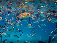 Mexico Rocks, Belizean Barrier Reef, Ambergris Caye, San Pedro, Belize, island, Belize District,nation of Belize, in Central America island