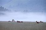 Elk practicing defensive skills at dawn near North Cascades National Park, Washington State, WA, USA