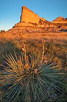 Scotts Bluff National Monument, Nebraska: Yucca and prairie grasses at sunrise at Scotts Bluff.