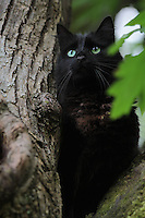 A cat named Gilligan is stuck in a tree in Lake Forest Park, WA. (© Karen Ducey Photography)