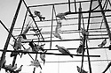Caged doves on a rooftop in the French colony slum in Islamabad. The slum is inhabited by the Christian minority of the city, living in poor conditions and being discriminated against on the basis of their religion.