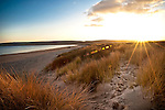 Summer beach scene with grasses and distant view of people walking along beach with setting sun