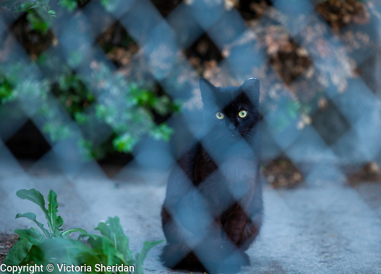 Rivertown Cats: Antioch, California