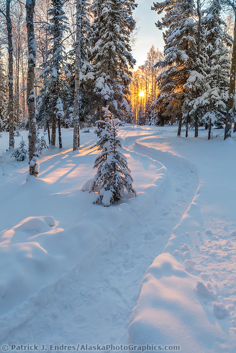 Trail leading into the snow covered boreal forest in Fairbanks, Alaska.