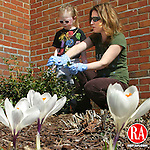 PROSPECT CT.-19 MARCH 2010-031910DA02- Crocus's reach for the sun as Kelly Grenier and her daughter Mary, 3, of Prospect enjoy the warm weather while cutting back a holly bush on the grounds of St. Anthony's Church in Prospect Friday. The official start of spring is at 1:23 PM today.<br /> Republican-American  Darlene Douty