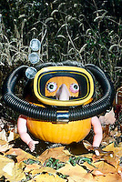 Anything goes: Jack o' Lantern in Scuba gear greets the children on thier way to trick and treat for Halloween
