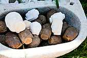 Long Island, New York,  Shinnecock Harbor. A bucket of Buddha Heads.