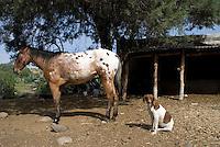 Farm animals at Don Federico Rodriguez Parada's Tinacal in San Jose Buenavista. Pulque route Tlaxcala, Mexico June 6, 2007