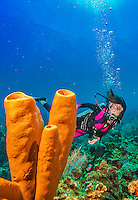 9 July 2013: SCUBA diver Sally Herschorn explores a formation of sea sponges on Lexau's Legacy Reef off the North Shore of Grand Cayman Island.  Located in the British West Indies in the  Caribbean, the Cayman Islands are renowned for excellent scuba diving, snorkeling, beaches and banking.  Mandatory Credit: Ed Wolfstein Photo