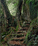 Beech Forest Stairs<br />