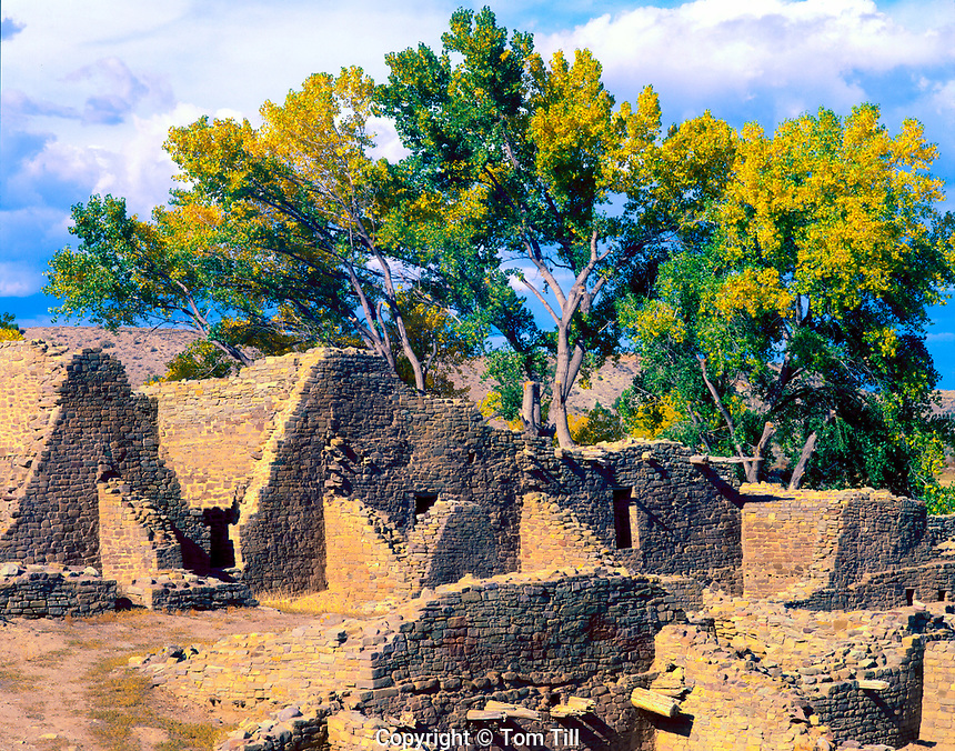 Cottonwoods and ancient  ruins, Aztec National Monument, New Mexico,  Anscestral Puebloan  structures