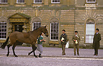 Badminton Horse Trials. Gloucestershire. Judges check over horses before start of three day event.   The English Season published by Pavilon Books 1987