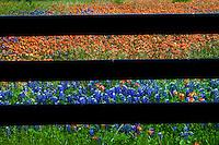 Wild Flowers near Chappel Hill, TX - 2014.