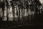 Thetford Forest with figure walking in distance