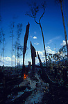 South America, Brazil, Amazon. Deforestation of primary rainforest by campesinos. This land will be sold for cattle ranching.  Then will become arid desert. 2001.'MEAT' across the World..foto © Nigel Dickinson