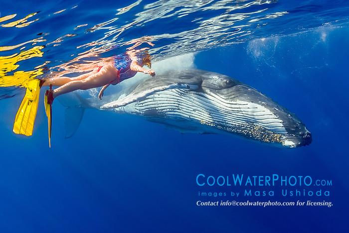 woman snorkeler and humpback whale, Megaptera novaeangliae, Hawaii, Pacific Ocean