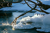 &quot;Iced Branch at Eagle Falls&quot;- This iced over branch was photographed at Eagle Falls, above Emerald Bay, CA<br />