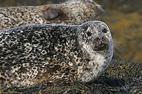 15/08/10 Seal deaths inquiry