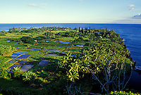 Taro fields, also known as lo'i, are a traditional food of Hawaiians and thrive on lush Keanae Peninsula on the way to Hana, Maui.