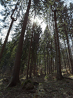 FOREST_LOCATION_90206