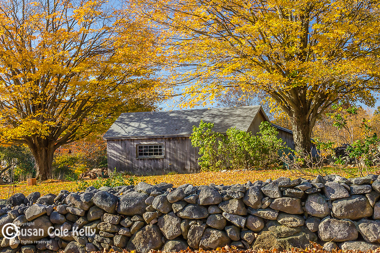 Fall foliage in Exeter, Rhode Island, USA