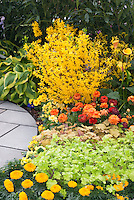 Flower garden with Forsythia x intermedia Show Off aka Mindor, Hosta, Heuchera, Tagetes Marigolds, Zantedeschia, Primula, Ranuculus in showy garden with circular path patio