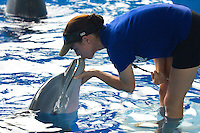 Winter the Dolphin & Abby Stone, Dolphin Tale the movie