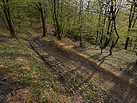 FOREST_LOCATION_90194