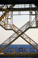 pelican on rail of offshre oil rig