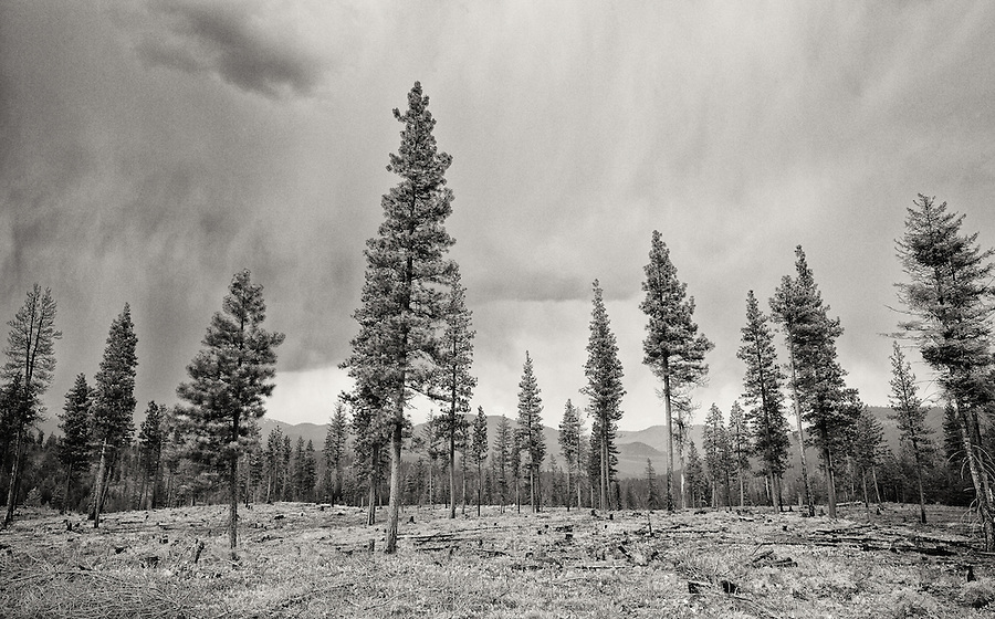 Low rain clouds threaten to deluge the forest with rain along a remote logging road in Washington State.