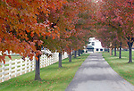 Autumn trees line road to barn, Commonwealth of Pennsylvania, Keystone state, Thirteen Colonies, Constitution Fine Art Photography by Ron Bennett, Fine Art, Fine Art photography, Art Photography, Copyright RonBennettPhotography.com © Fine Art Photography by Ron Bennett, Fine Art, Fine Art photography, Art Photography, Copyright RonBennettPhotography.com ©