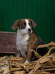 Mixed Breed dogs in the studio Shopping cart has 3 Tabs:<br /> <br /> 1) Rights-Managed downloads for Commercial Use<br /> <br /> 2) Print sizes from wallet to 20x30<br /> <br /> 3) Merchandise items like T-shirts and refrigerator magnets